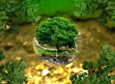 filmy o ekologii